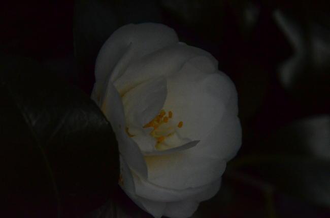 D70_0304.jpg